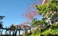 清境民宿 - 「清境天星渡假山莊」照片4