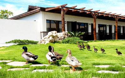 盤古拉渡假花園民宿照片: 環境