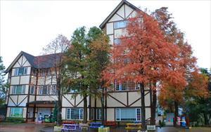 「綠光森林民宿」主要建物圖片