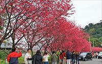 「泰安派出所櫻花林」主要建物圖片