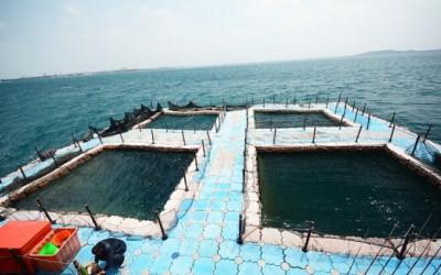 海立方海洋牧場
