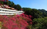 「協雲宮」主要建物圖片