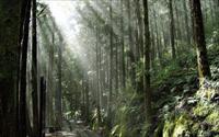 「太平山森林遊樂區」主要建物圖片