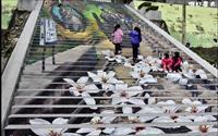 「建中國小3D彩繪樓梯」主要建物圖片
