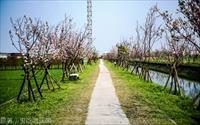 「羅莊櫻花步道」主要建物圖片