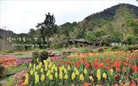 「桃源仙谷」主要建物圖片